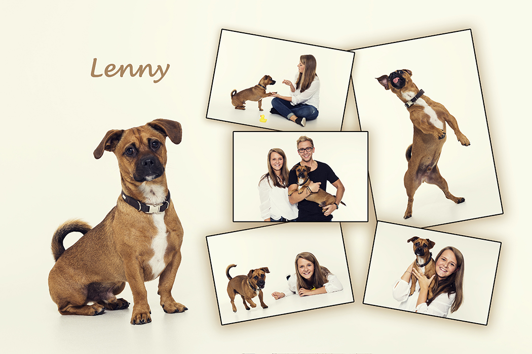 Hund Lenny in Aktion mit viel Spaß
